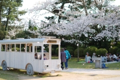bus_sakura